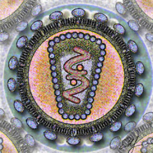 Возбудитель болезни ВИЧ. Источник фото: Los Alamos National Laboratory [Public domain or Public domain], via Wikimedia Commons.