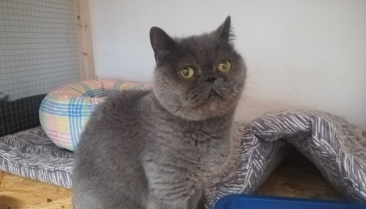 Кошка с ласнамяэской улицы Выру разыскивает потерявшегося хозяина.  Источник фото: Facebook.